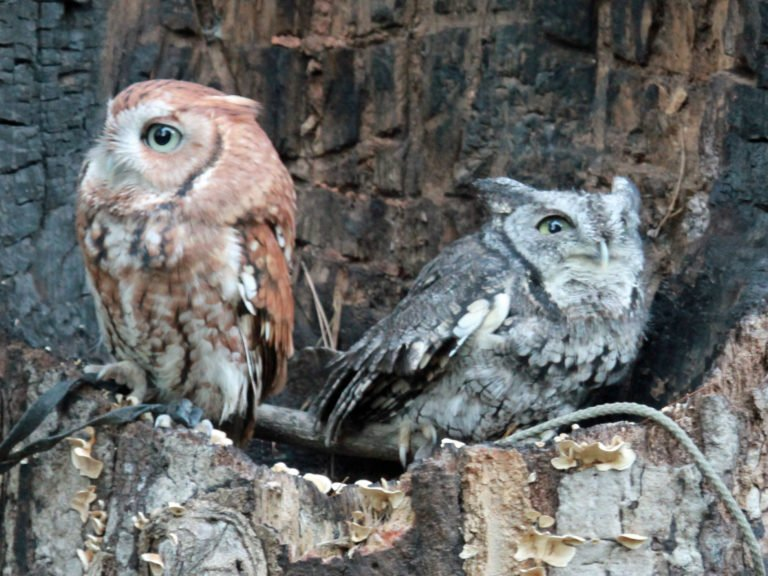 Night Owls Unite…