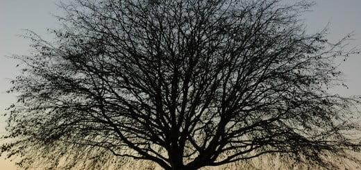 tree-beach-golden-112702-o