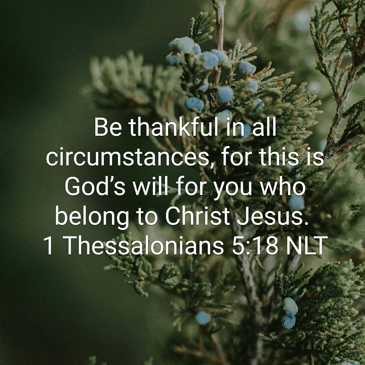 Thankful During The Storms