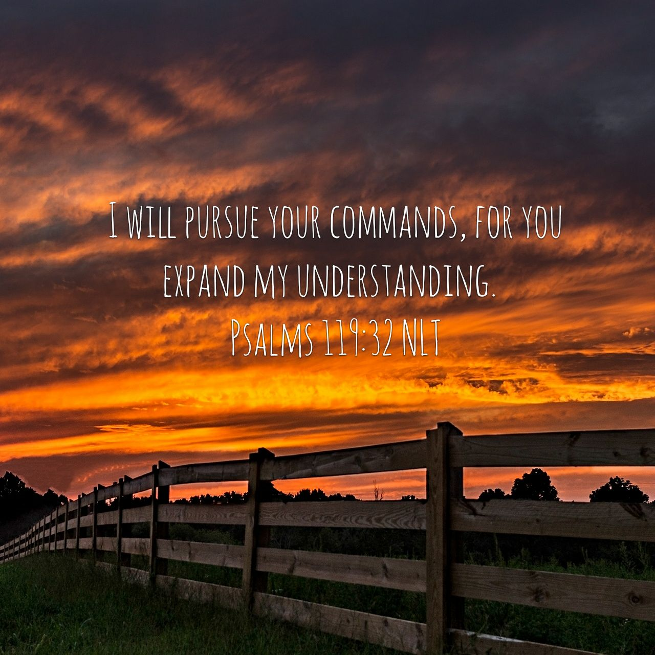 I will pursue your commands, for you expand my understanding. - Psalms 119:32 NLT